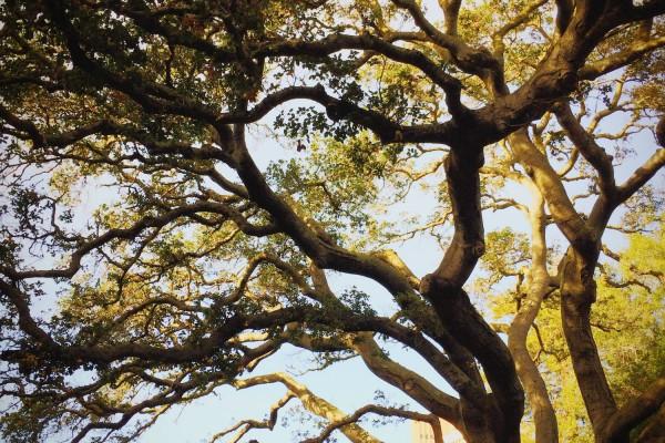 Diagnostic et soin des arbres